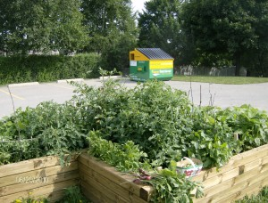 Raised Garden beds at Three Willows United Church provide fresh produce for Chalmers WEST