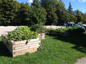 Raised Garden beds at Three Willows United Church support Chalmers WEST